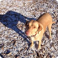 Adopt A Pet :: Gilly - Boston, MA