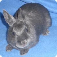 Adopt A Pet :: Gigi - Woburn, MA