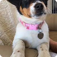 Adopt A Pet :: Vp litter - Rhinna - Livonia, MI