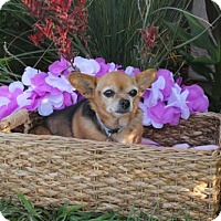 Adopt A Pet :: Chiquita - Imperial Beach, CA