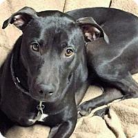 Adopt A Pet :: Flynn - Binghamton, NY