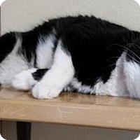 Adopt A Pet :: Tux - Lakewood, CO