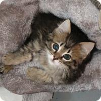Adopt A Pet :: Glenda - Geneseo, IL
