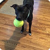 Adopt A Pet :: June - Albemarle, NC