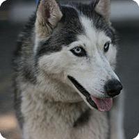 Adopt A Pet :: Wolfie - Canoga Park, CA
