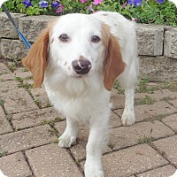Adopt A Pet :: Ublink - West Chicago, IL