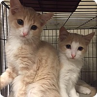 Adopt A Pet :: Pan - Ortonville, MI