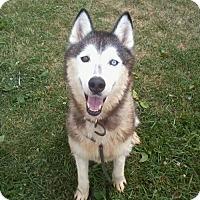 Adopt A Pet :: Jeter - Harvard, IL