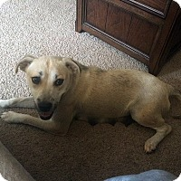Adopt A Pet :: Momma - Hopkinsville, KY