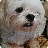 Adopt A Pet :: Gia Harris - Urbana, OH