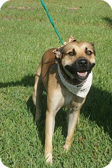 German Shepherd Dog/Shepherd (Unknown Type) Mix Dog for adoption in Kinston, North Carolina - Nik