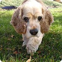 Adopt A Pet :: Grimm - Chicago, IL