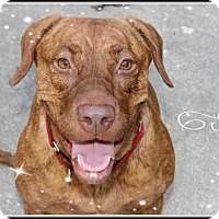 Adopt A Pet :: Scarlett - Calgary, AB