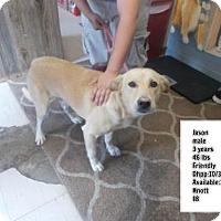 Adopt A Pet :: Jason - Janesville, WI