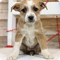 Adopt A Pet :: Camryn - Waldorf, MD
