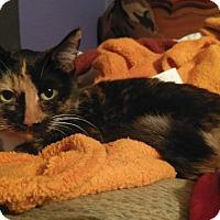 Adopt A Pet :: STAR - Hampton, VA