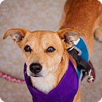 Adopt A Pet :: Skeeter - Springfield, MO