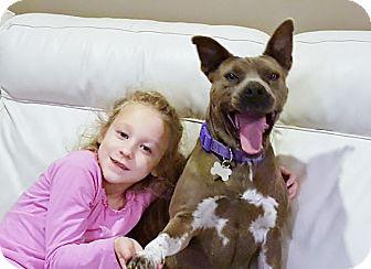 Australian Cattle Dog/Bulldog Mix Dog for adoption in Nashville, Tennessee - LIBBY