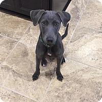 Adopt A Pet :: Jean - Pendleton, NY