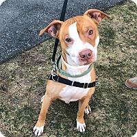 Adopt A Pet :: Kane - Mansfield, MA