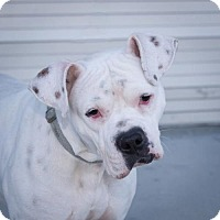 Adopt A Pet :: Stephano - Alameda, CA