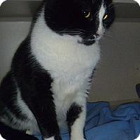 Adopt A Pet :: Boris - Hamburg, NY