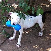 Adopt A Pet :: Jelly Bean - Orange Cove, CA
