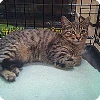 Adopt A Pet :: Daisy - Modesto, CA
