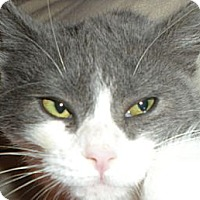 Adopt A Pet :: Poppy - Hood River, OR