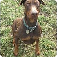 Adopt A Pet :: Harley--adopted!! - New Richmond, OH