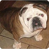 Adopt A Pet :: Hercules - San Diego, CA
