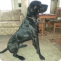 Adopt A Pet :: Rufus - Martinsburg, WV