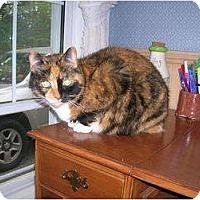 Adopt A Pet :: Fathom & Domino - Portland, ME