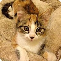 Adopt A Pet :: Abigail - St. Louis, MO
