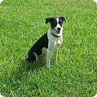 Adopt A Pet :: Cami - Austin, TX