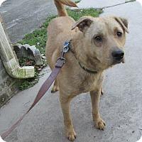 Adopt A Pet :: CHEWY - Orange Park, FL