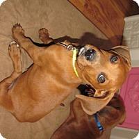 Adopt A Pet :: Clarke - Homer, NY