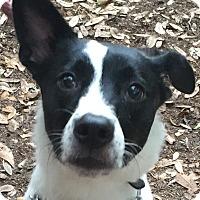 Adopt A Pet :: Tippy#5F (Leia) - Orlando, FL