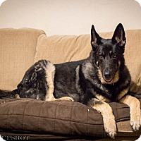 Adopt A Pet :: Monk - Phoenix, AZ