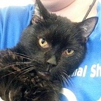 Adopt A Pet :: C-69897 Manny - Westampton, NJ