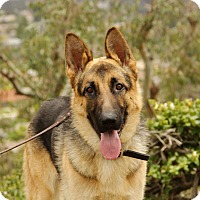 German Shepherd Dog Mix Dog for adoption in Laguna Niguel, California - Grant