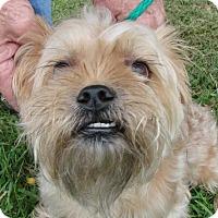 Adopt A Pet :: Chewy - Erwin, TN
