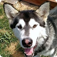 Adopt A Pet :: DALTON - Boise, ID