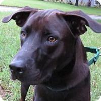 Adopt A Pet :: Barrett~Stunning! - St Petersburg, FL