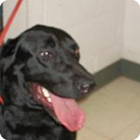 Adopt A Pet :: Sugar - Gulfport, MS