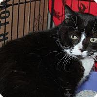 Adopt A Pet :: Spooky - Brooklyn, NY
