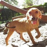 Shepherd (Unknown Type) Mix Dog for adoption in Von Ormy, Texas - Alfa Romeo(PC)