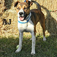 Adopt A Pet :: AJ - Lawrenceburg, TN