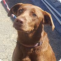 Adopt A Pet :: DANCER - Corning, CA