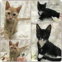 Adopt A Pet :: Jericho - Joliet, IL
